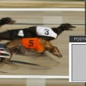 Visual Form Guides for Greyhound Racing